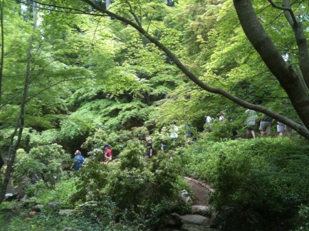 Students following Meg the gardener through the beautiful Japanese Garden at Morven!