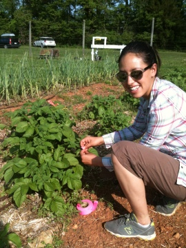Navona tagging the leaves of a potato plant!
