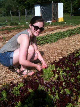 Emily tagging some lettuce leaves!