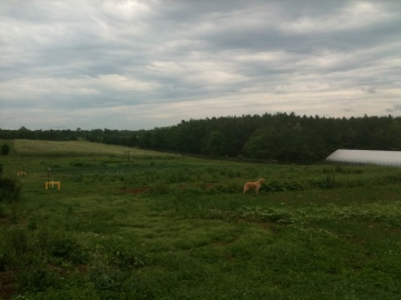 What a beautiful place! (Notice Sully the farm dog in the foreground)