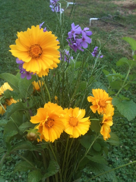 Fresh-cut flowers from the Morven Kitchen Garden.